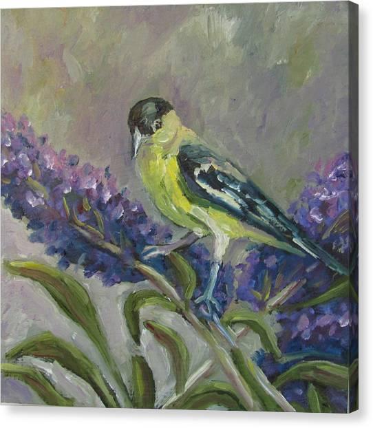 A Lesser Goldfinch Canvas Print