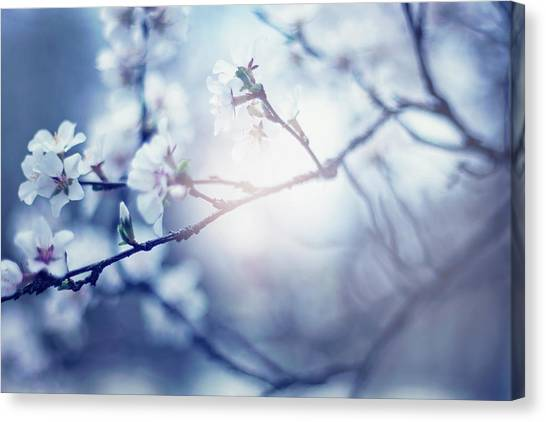 A Light Exists In Spring Canvas Print