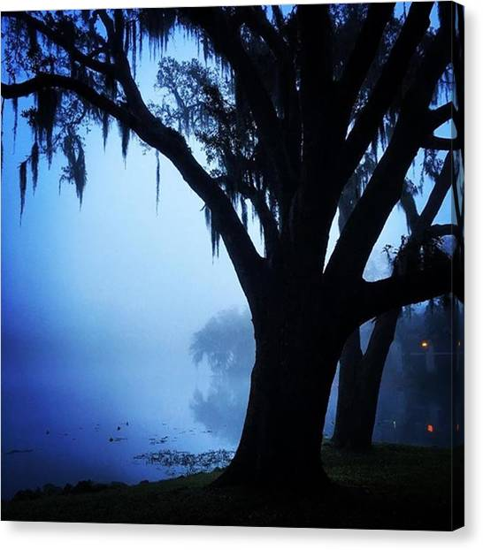 Foggy Forests Canvas Print - A Light Through The Fog 2 by Dustin Goolsby