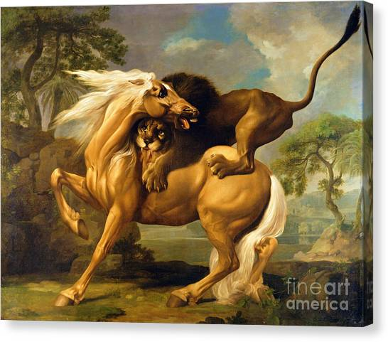 Lion Canvas Print - A Lion Attacking A Horse by George Stubbs