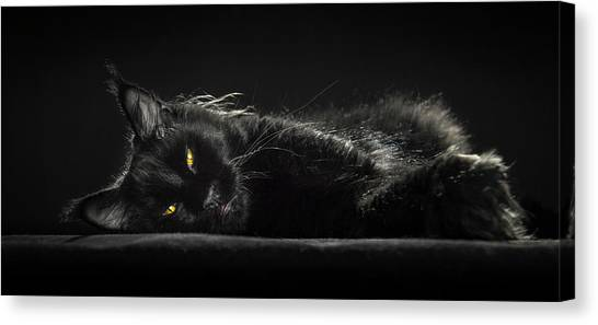 A Little Bit Tired Canvas Print