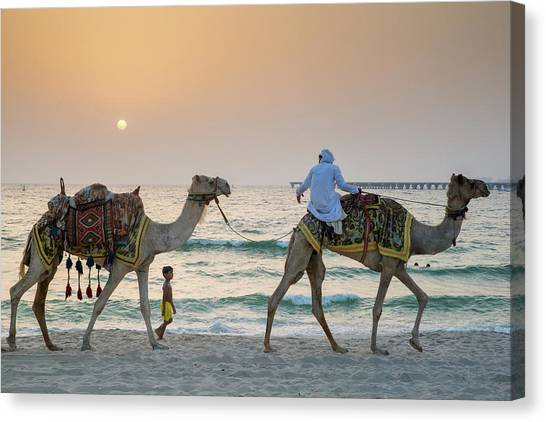 A Little Boy Stares In Amazement At A Camel Riding On Marina Beach In Dubai, United Arab Emirates Canvas Print