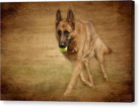 Canvas Print featuring the photograph A Little Playtime - German Shepherd Dog by Angie Tirado
