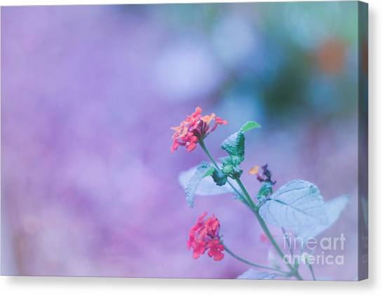 A Little Softness, A Little Color - Macro Flowers Canvas Print