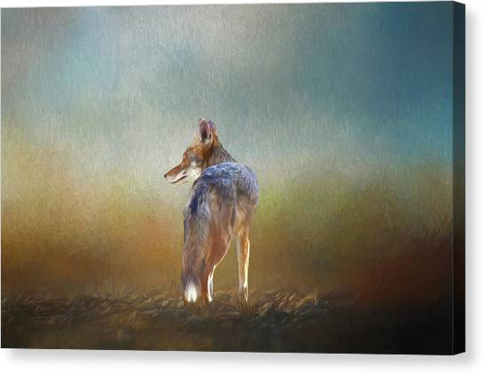Howling Wolves Canvas Print - A Lone Coyote by Linda Brody