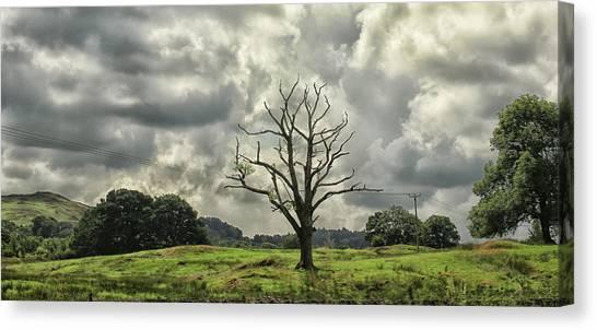Keswick Canvas Print - A Lonesome Tree by Martin Newman