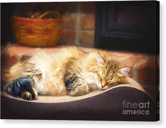 A Long Winter's Nap Canvas Print