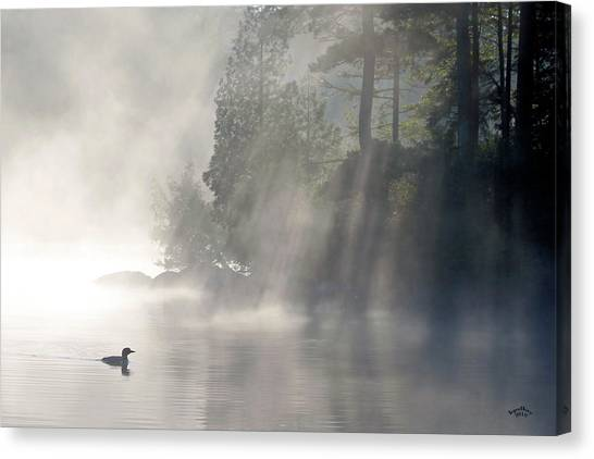 Loons Canvas Print - A Loon In The Mist by Brian Pelkey