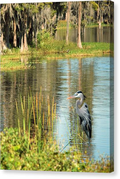 Florida Swamp Canvas Print - A Lovely Day by Adele Moscaritolo