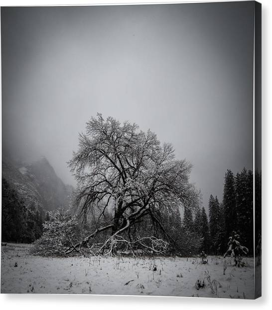 A Magic Tree Canvas Print