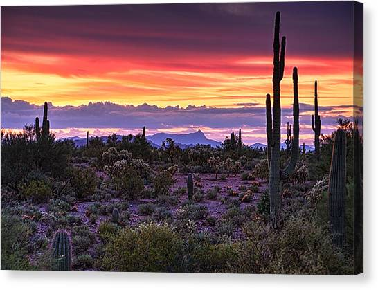 A Magical Desert Morning  Canvas Print