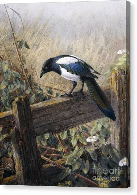 Magpies Canvas Print - A Magpie Observing Field Mice by Johan Gerard Keulemans
