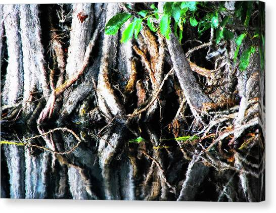 Mangrove Trees Canvas Print - A Mess Of Mangroves by Simone Hester