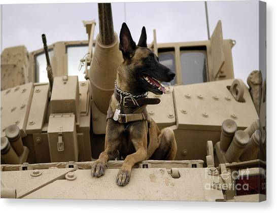 Canvas Print featuring the photograph A Military Working Dog Sits On A U.s by Stocktrek Images