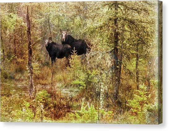 A Mother And Calf Moose. Canvas Print
