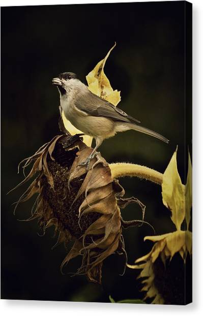 A Mouthful Canvas Print