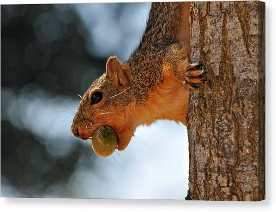 A Mouthful Canvas Print by Teresa Blanton