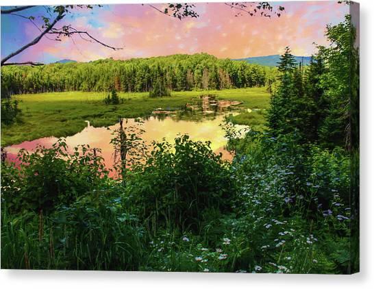 A New England Bog. Canvas Print