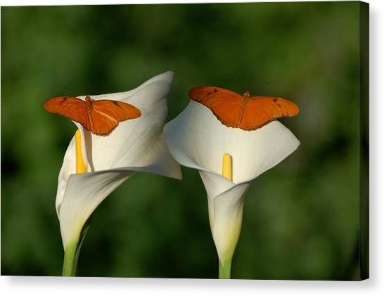 Canvas Print - A Pair Of Butterflies Land Upon A Pair Of Lilies by Susan Heller