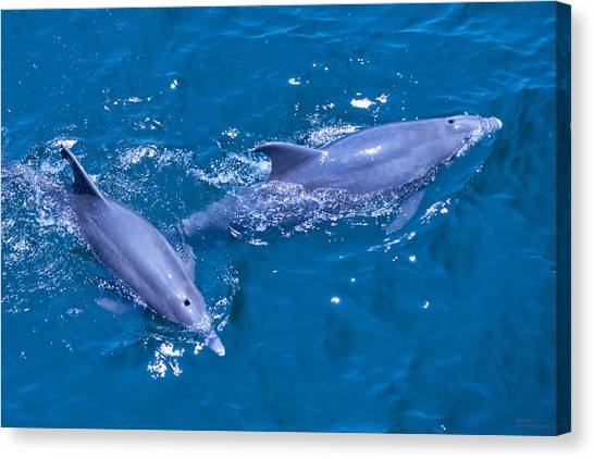 A Pair Of Dolphins Canvas Print by Bill Perry