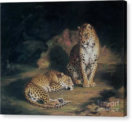 Laying Canvas Print - A Pair Of Leopards by William Huggins