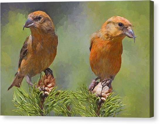 Crossbills Canvas Print - A Pair Of Male Red Crossbills - Painted by Ericamaxine Price