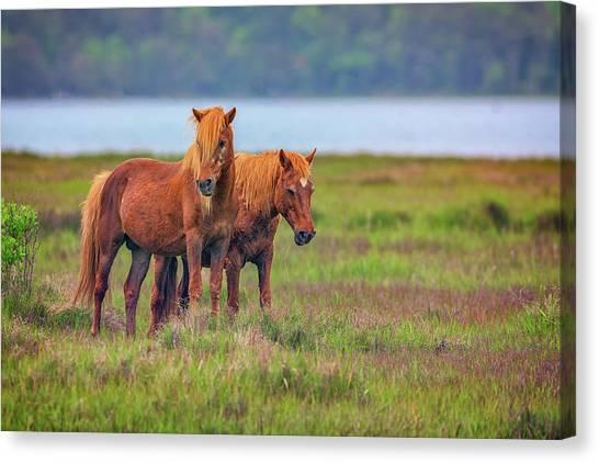 Maryland Horses Canvas Print - A Pair Of Ponies by Rick Berk
