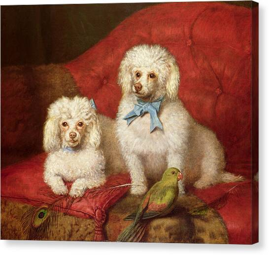 Poodles Canvas Print - A Pair Of Poodles by English School