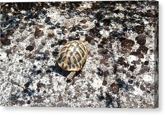 A Pal We Found In Greece Canvas Print