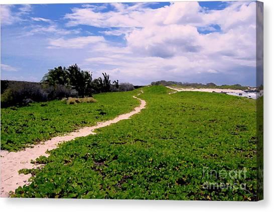 A Path Thru The Dunes Canvas Print