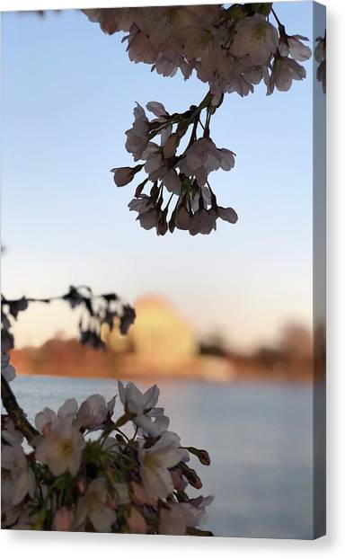 Jefferson Memorial Canvas Print - A Peek At Peak Bloom by Gloria Diallo