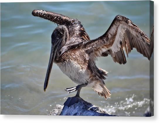 A Pelican Practising A Karate Kick Like Daniel In The Karate Kid Canvas Print