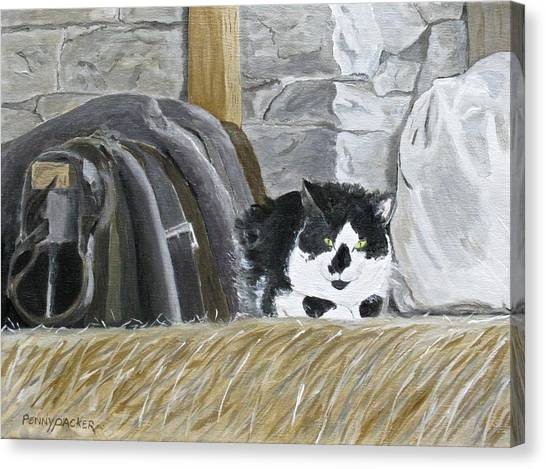 A Penns Valley Barn Kitty Canvas Print