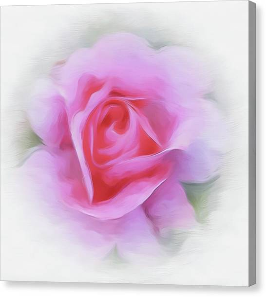A Perfect Pink Rose Canvas Print