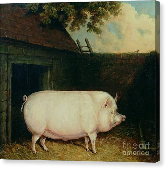 M.a Canvas Print - A Pig In Its Sty by E M Fox