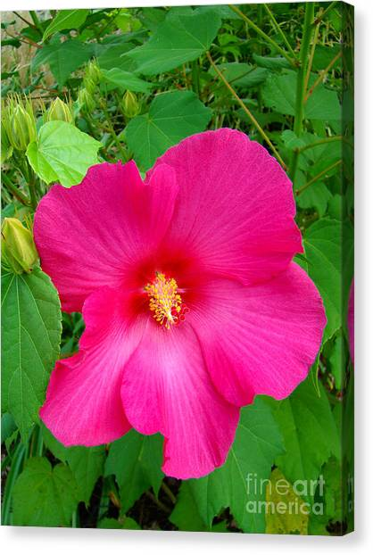 A Pink That Pops Canvas Print