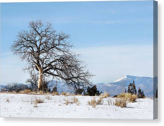 A Placid Winter Scene Canvas Print