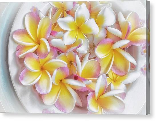 A Plate Of Plumerias Canvas Print