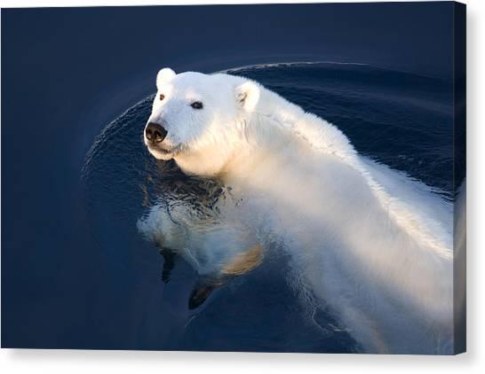 And Threatened Animals Canvas Print - A Polar Bear Glance by Ira Meyer