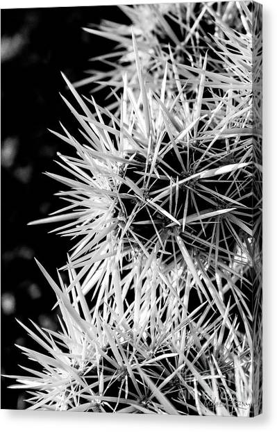 A Prickly Subject Canvas Print