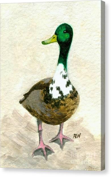 A Proud Duck Canvas Print