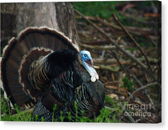 Turkey Dinner Canvas Print - A Quick Rest by Niko Chaffin