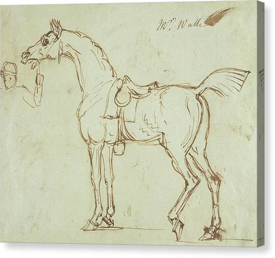 Pen And Ink Drawing Canvas Print - A Racehorse, Bridled And Saddled  by James Seymour