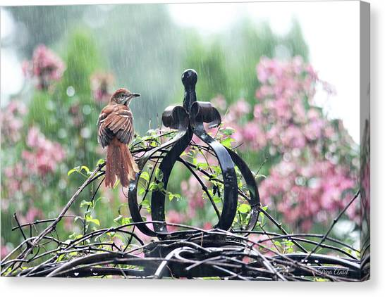 A Rainy Summer Day Canvas Print