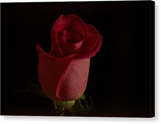 Canvas Print - A Red Rose by Susan Heller