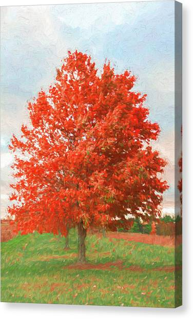 A Red Tree Canvas Print by Jeff Oates Photography