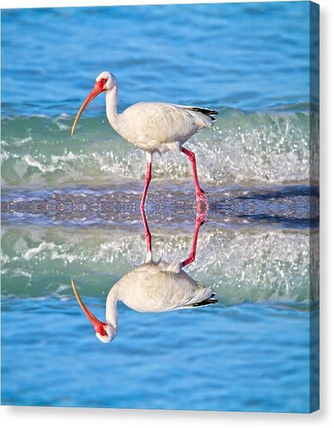 Ibis Canvas Print - A Reflective Walk by Betsy Knapp