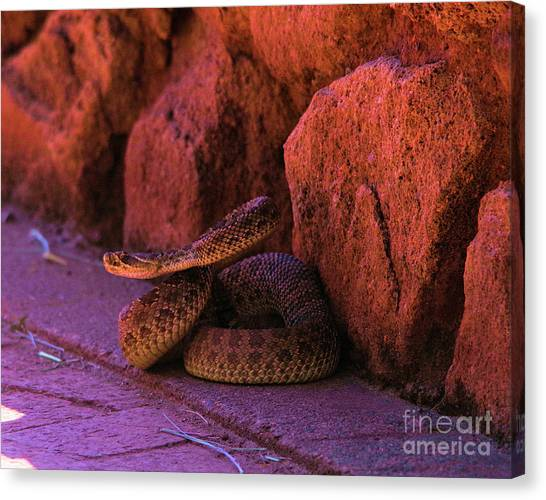 Poisonous Snakes Canvas Print - A Riled Up Rattler by Jeff Swan