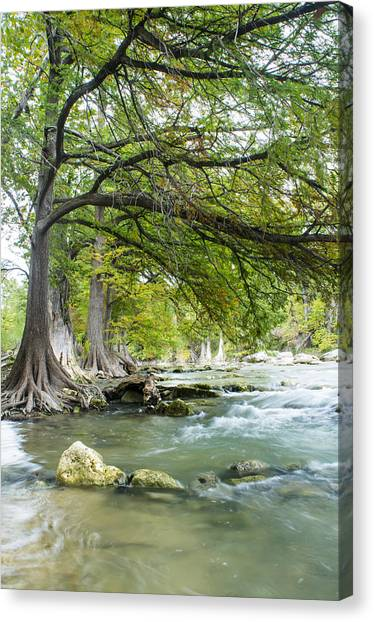 Brunch Canvas Print - A River Under Bald Cypress Trees by Ellie Teramoto