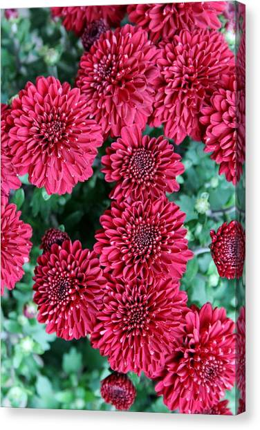 Sorority Canvas Print - A Rucker Red by Floral Notes  By D